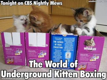 cat boxes1