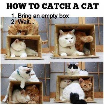 cat boxes2
