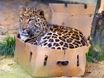 cat boxes3