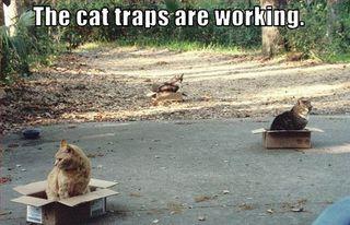 cat boxes4
