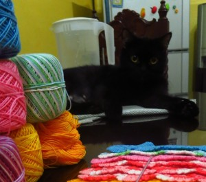 My cat Pepper, staring at me while I crochet