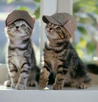 cat thurs2