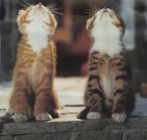 cat thurs3